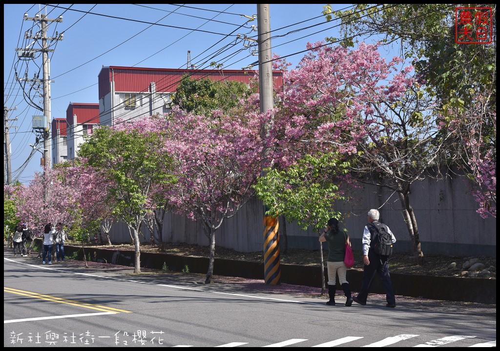 新社興社街一段櫻花