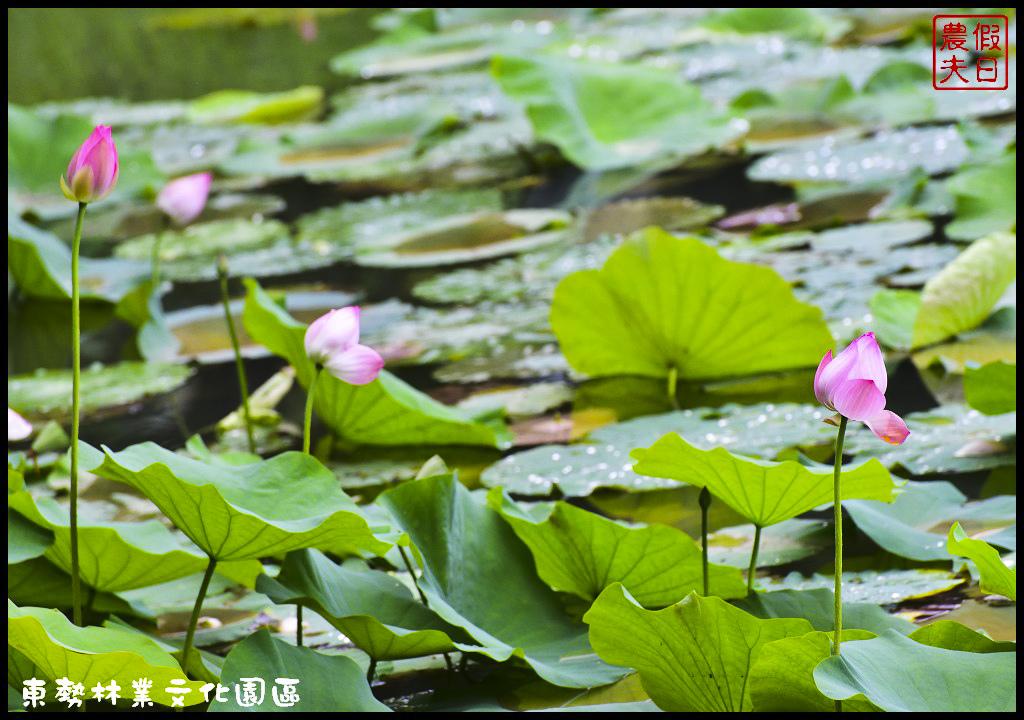 東勢林業文化園區DSC_1442.jpg