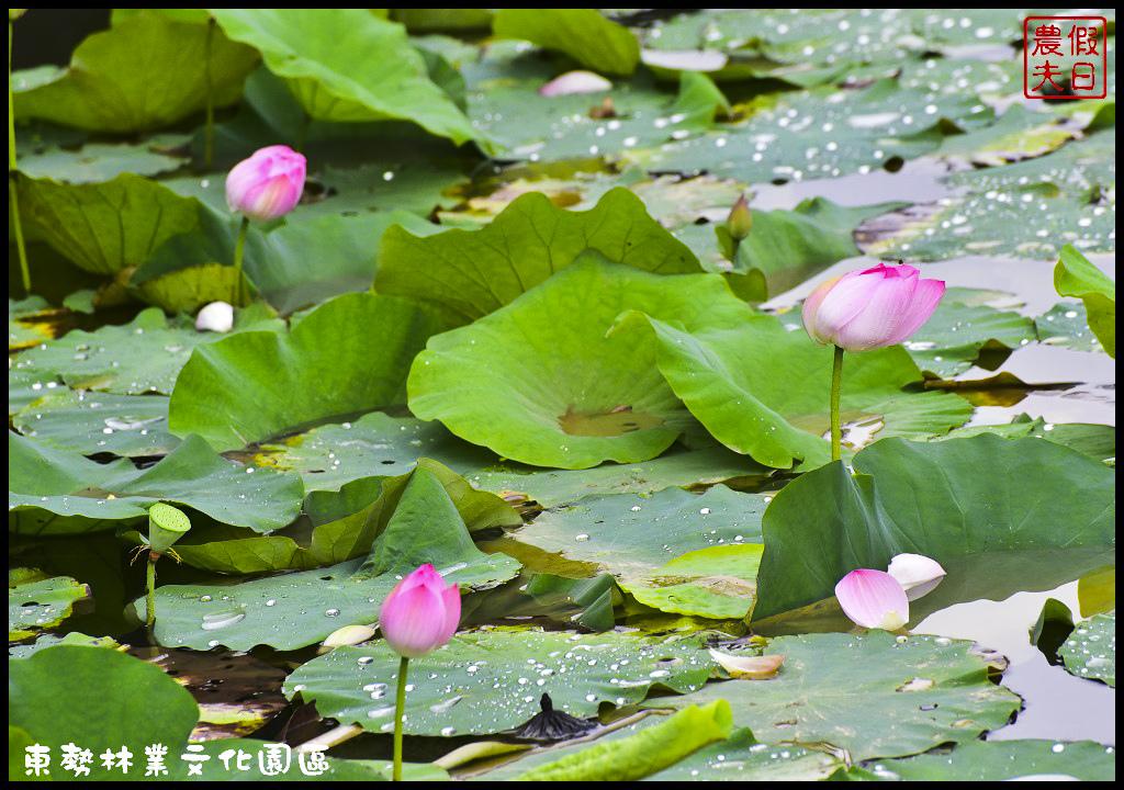 東勢林業文化園區DSC_1472.jpg