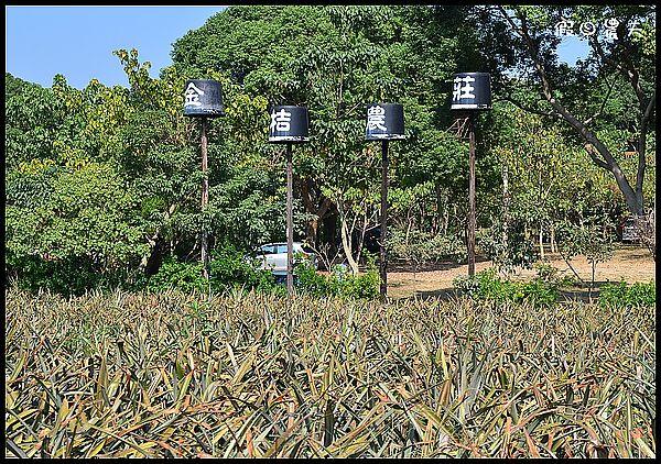 金桔農莊DSC_0263