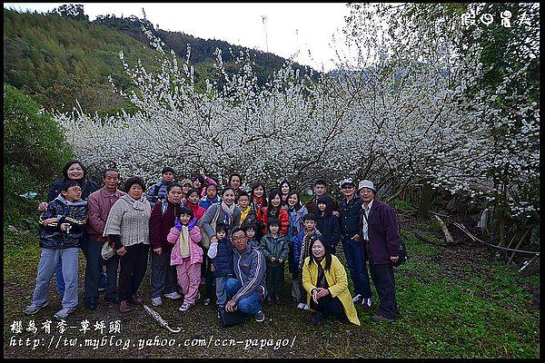 櫻為有李-草坪頭DSC_1214