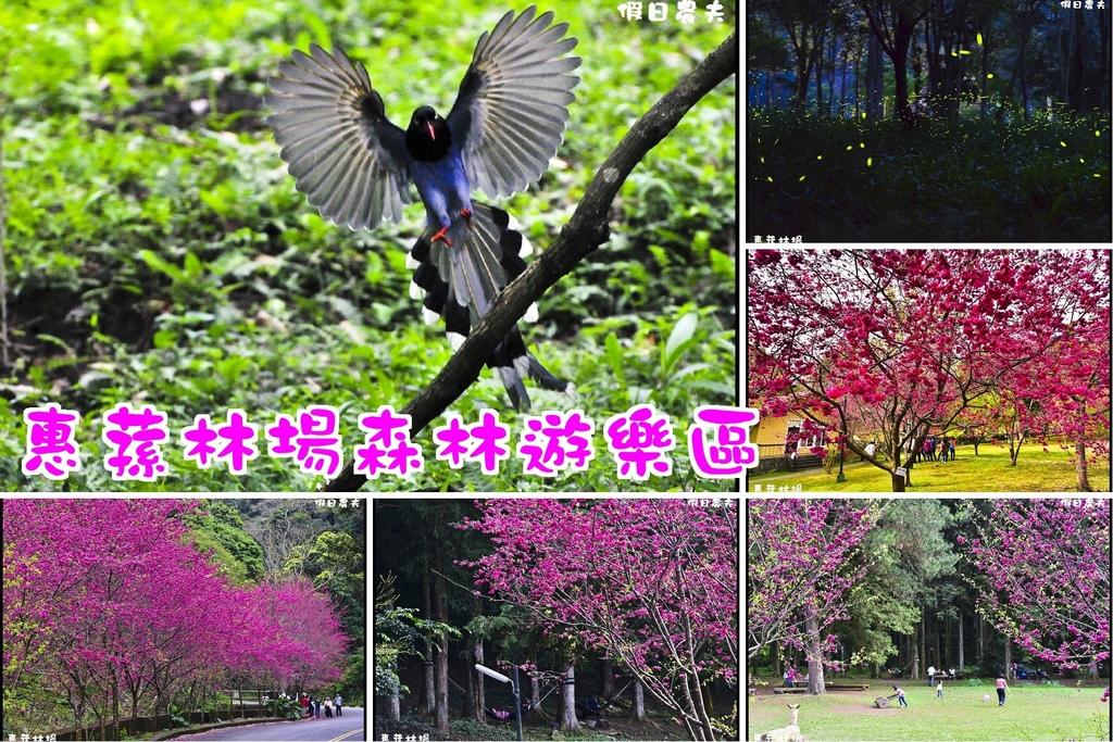 惠蓀林場森林遊樂區.jpg