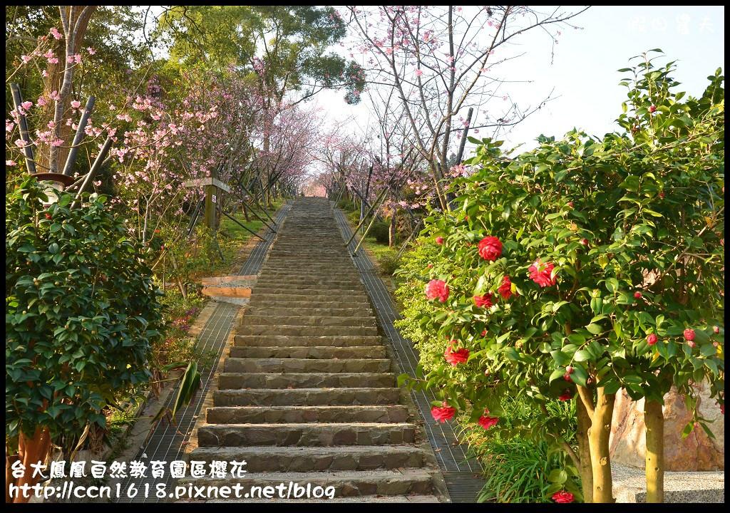 台大鳳凰自然教育園區櫻花DSC_5891