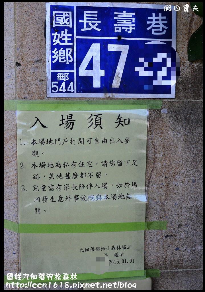 國姓九佃落羽松森林DSC_9923