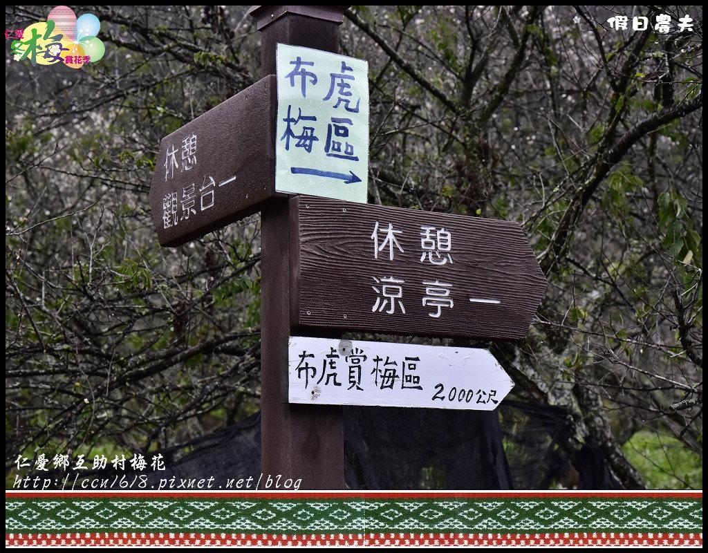 仁愛鄉互助村梅花_DSC3776