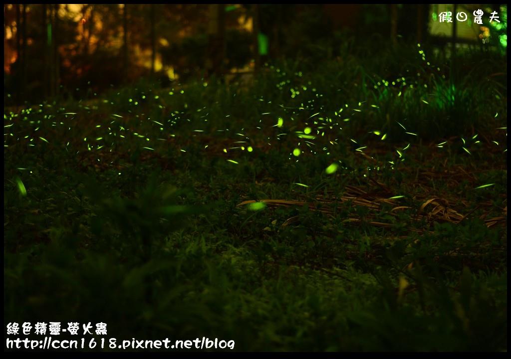 綠色精靈-螢火蟲螢火蟲2