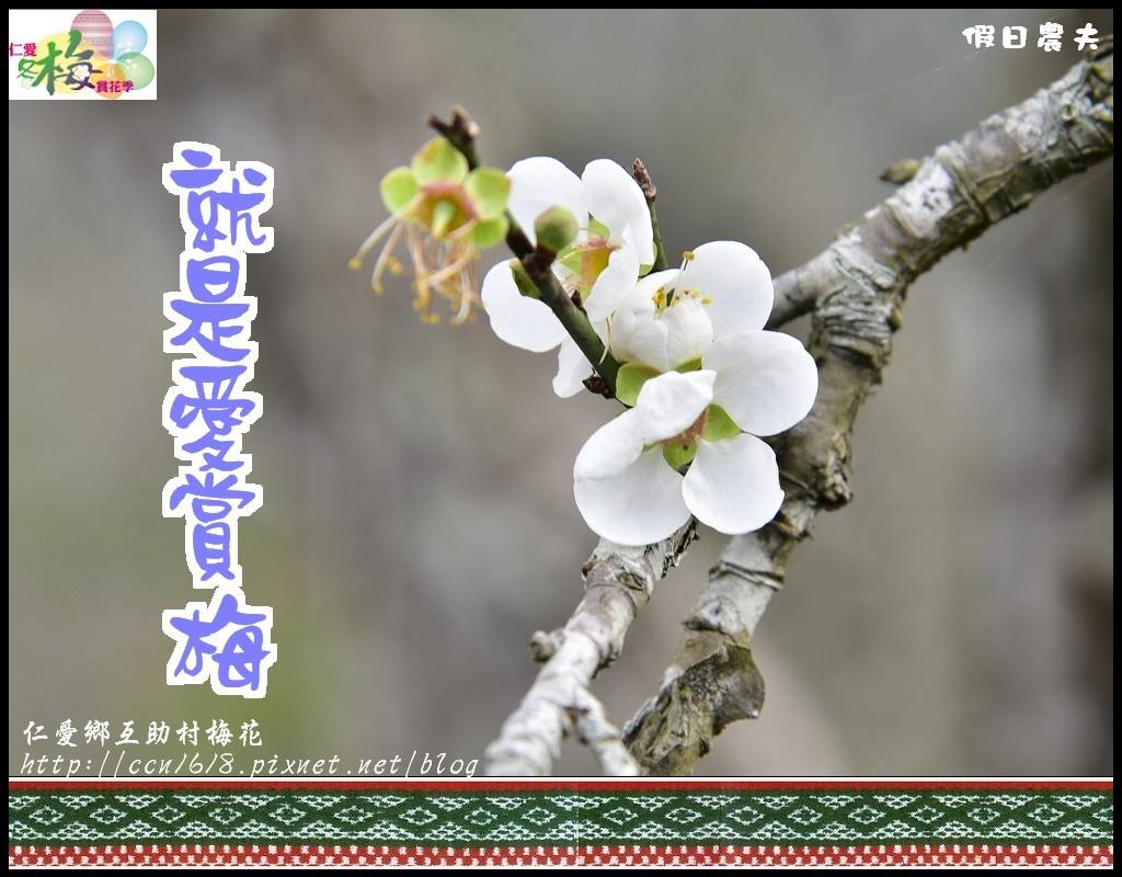 仁愛鄉互助村梅花_DSC2314.jpg