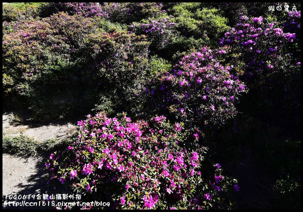 1040619合歡山攝影外拍DSC_1353