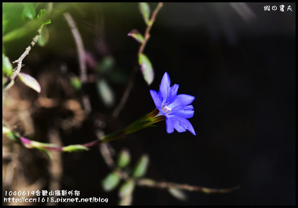 1040619合歡山攝影外拍DSC_1452