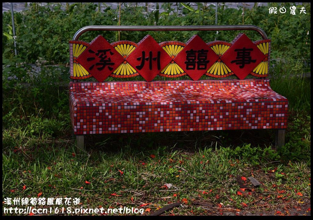 溪州綠筍路鳳凰花道DSC_8930