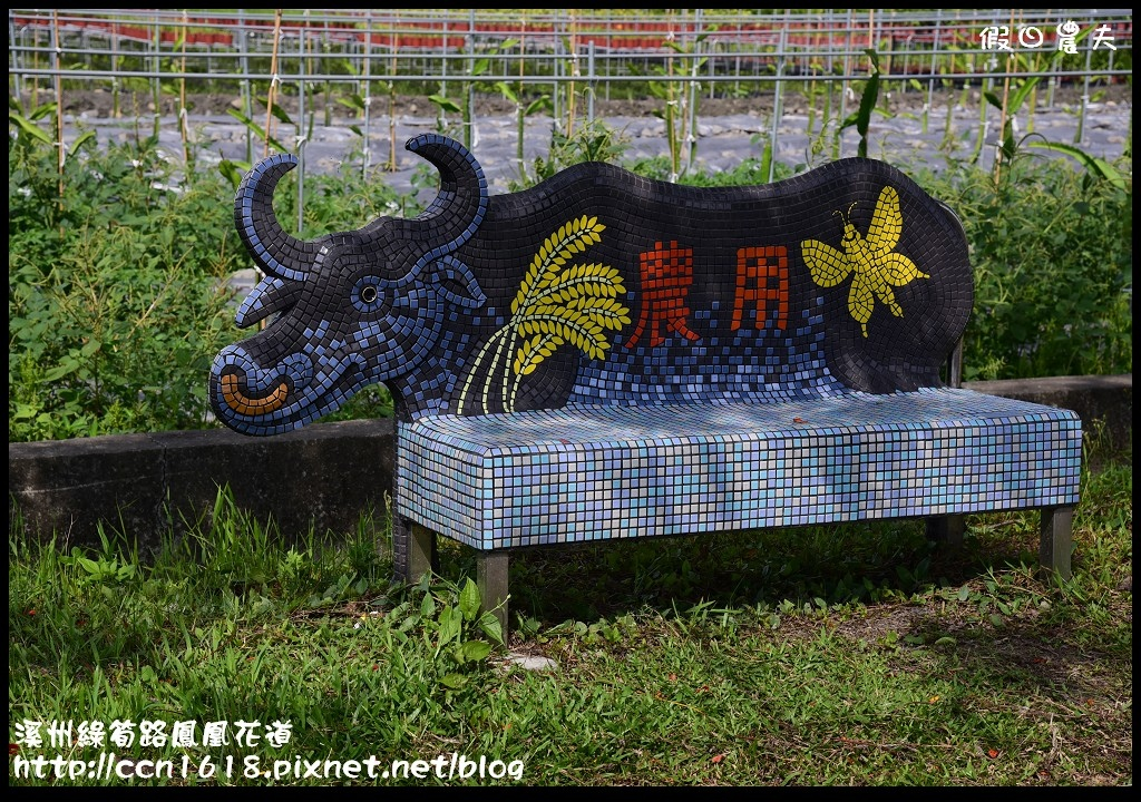 溪州綠筍路鳳凰花道DSC_8931