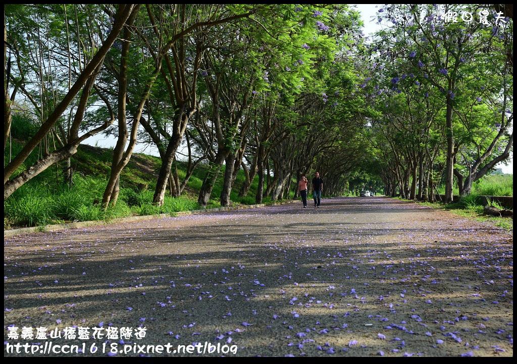嘉義盧山橋藍花楹隧道DSC_7104