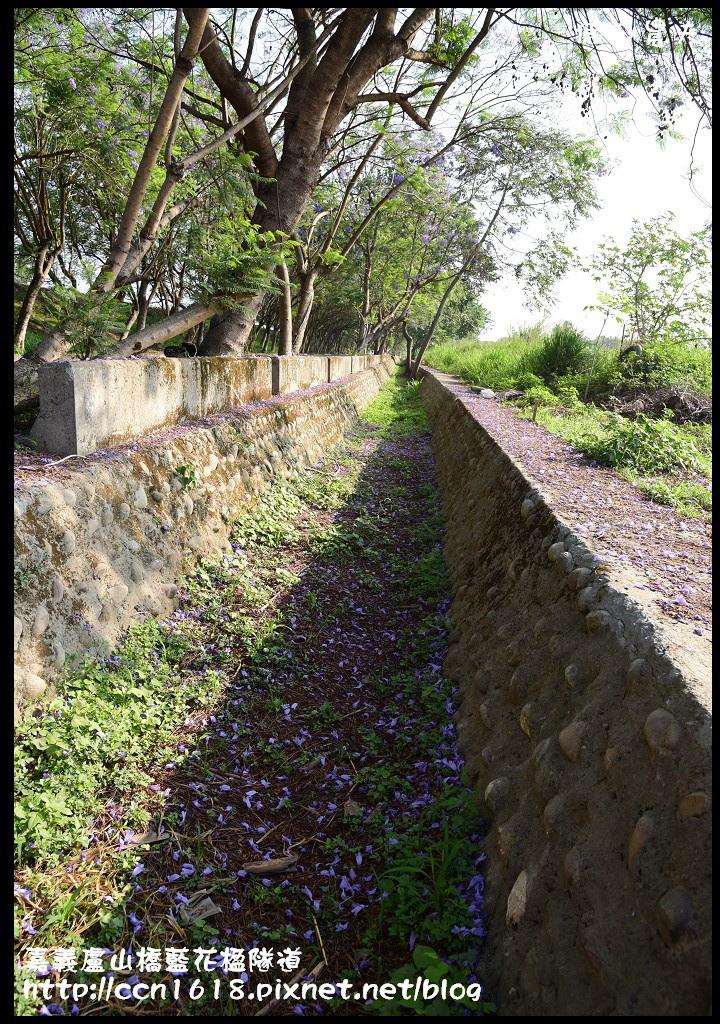 嘉義盧山橋藍花楹隧道DSC_7068