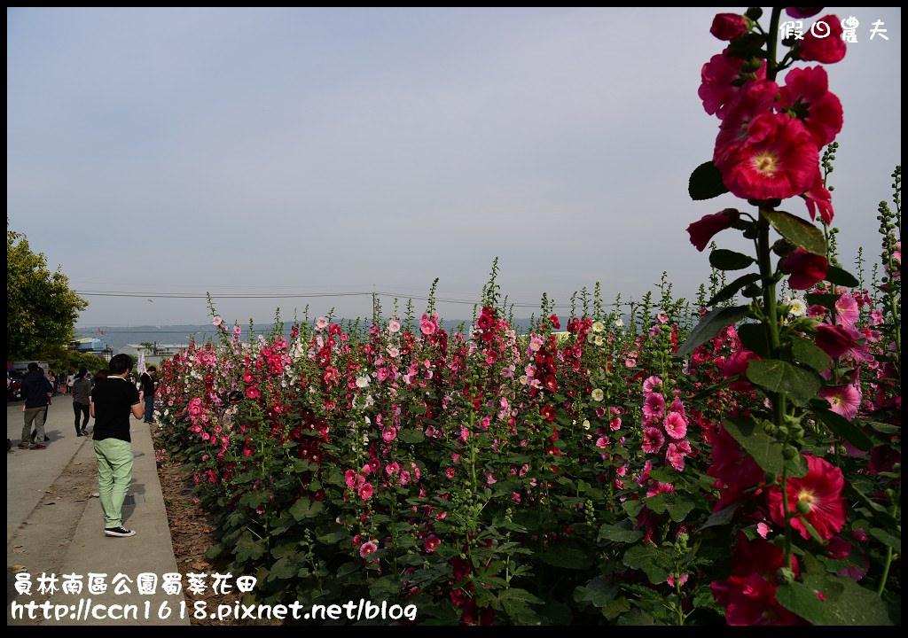 員林南區公園蜀葵花田DSC_2201