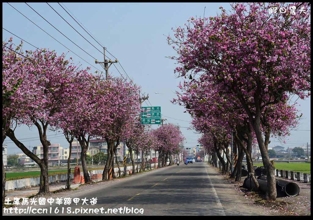 土庫馬光國中羊蹄甲大道DSC_1145