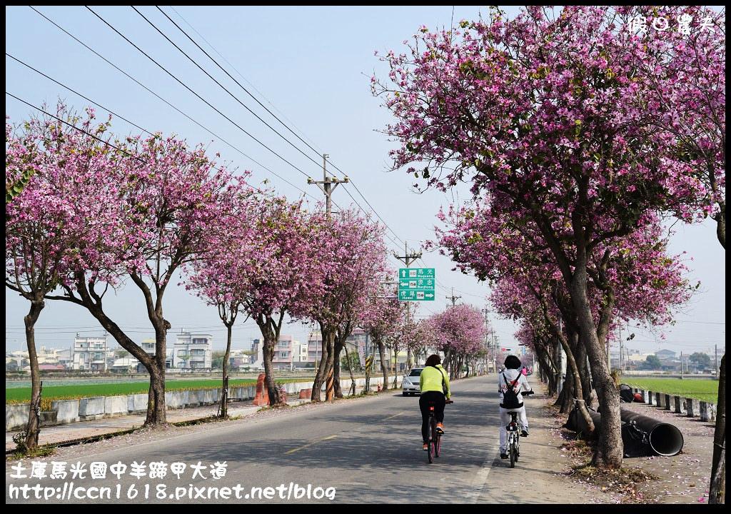 土庫馬光國中羊蹄甲大道DSC_1150