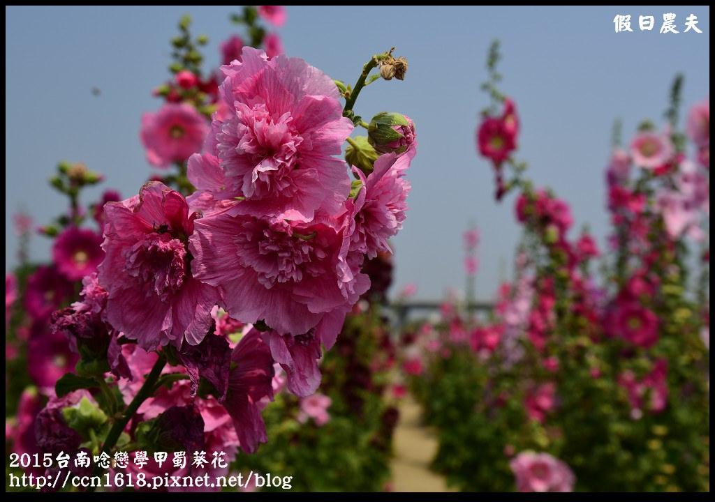 2015台南唸戀學甲蜀葵花DSC_1198