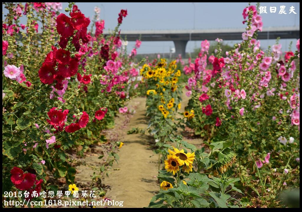 2015台南唸戀學甲蜀葵花DSC_1209