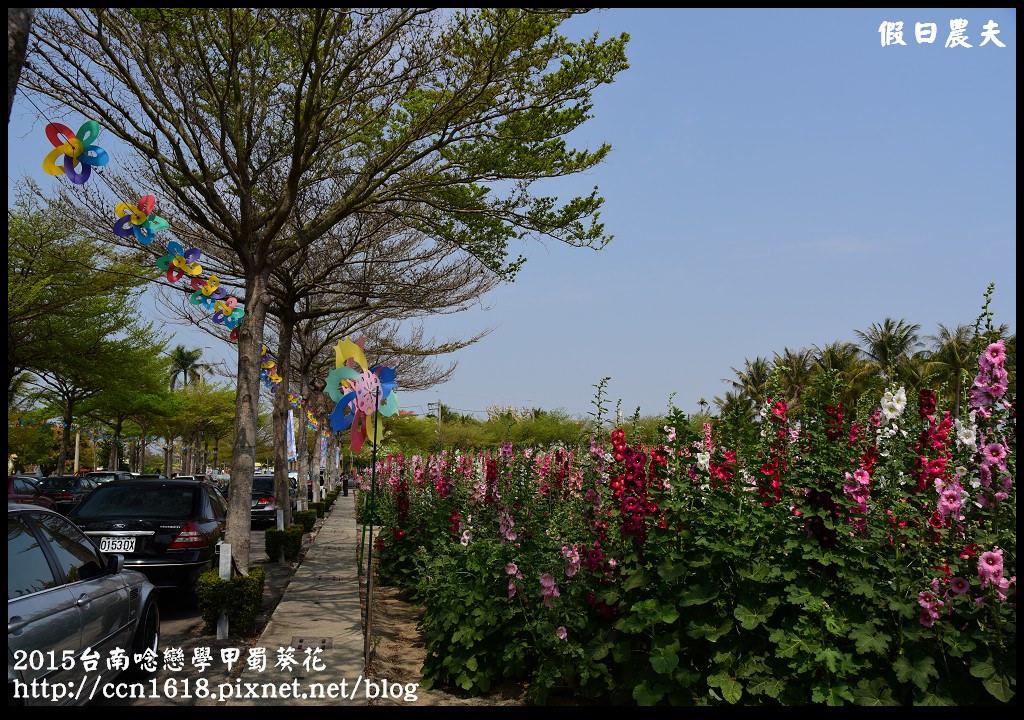 2015台南唸戀學甲蜀葵花DSC_1316