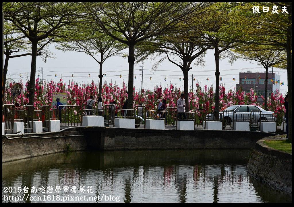 2015台南唸戀學甲蜀葵花DSC_1376