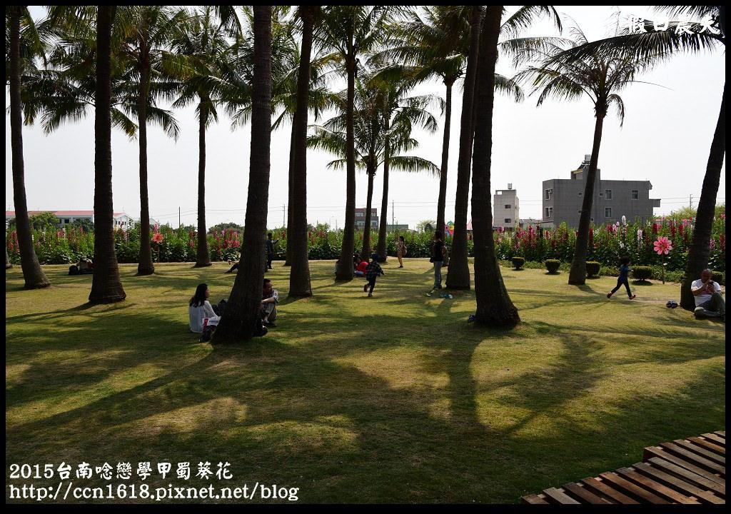 2015台南唸戀學甲蜀葵花DSC_1344
