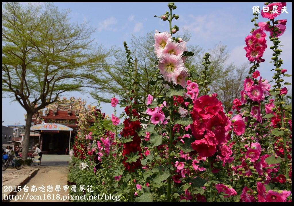 2015台南唸戀學甲蜀葵花DSC_1403