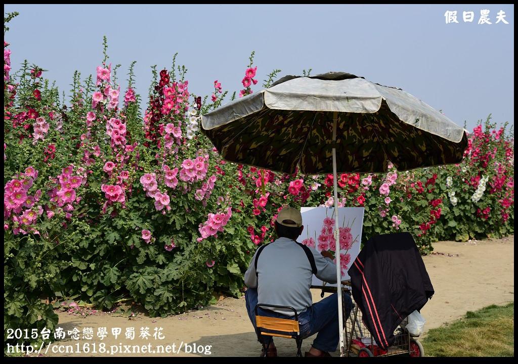 2015台南唸戀學甲蜀葵花DSC_1411