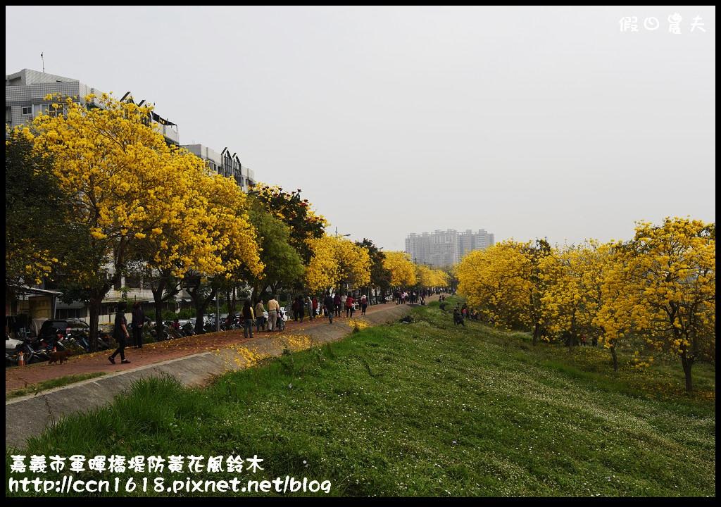 嘉義市軍暉橋堤防黃花風鈴木DSC_0521