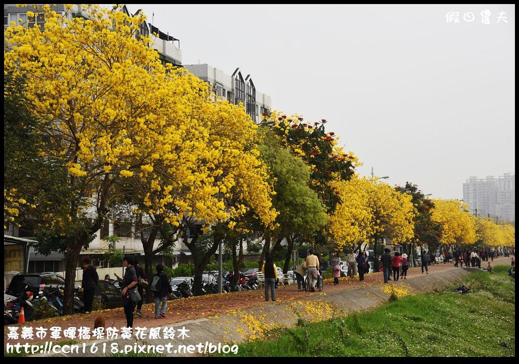 嘉義市軍暉橋堤防黃花風鈴木DSC_0523