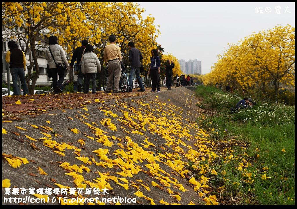 嘉義市軍暉橋堤防黃花風鈴木DSC_0526