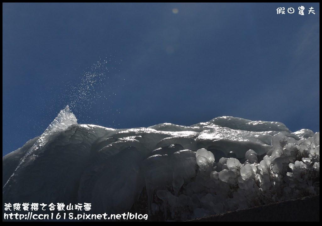 武陵賞櫻之合歡山玩雪DSC_5259