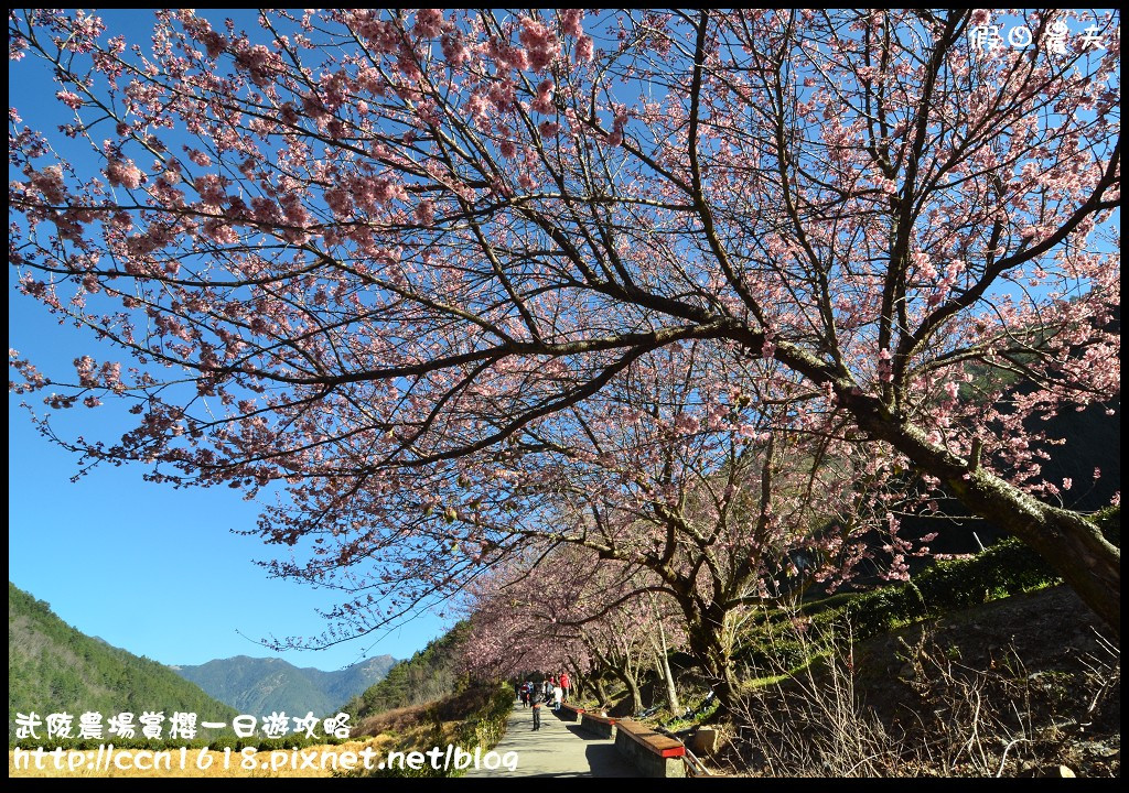 武陵農場賞櫻一日遊攻略DSC_5553