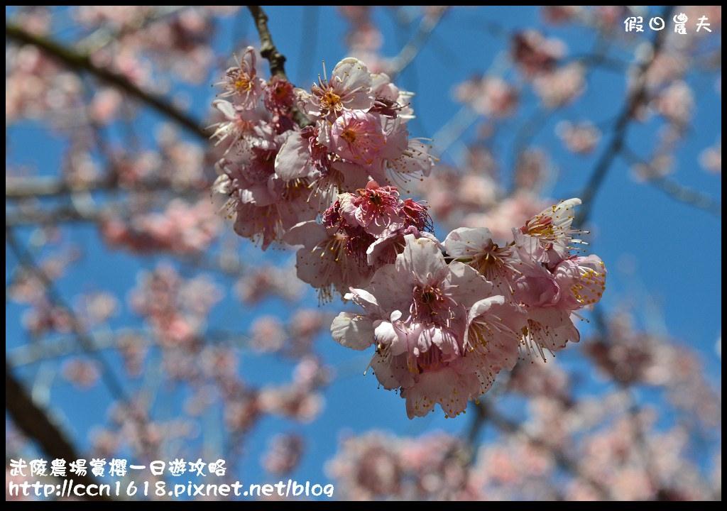武陵農場賞櫻一日遊攻略DSC_5763
