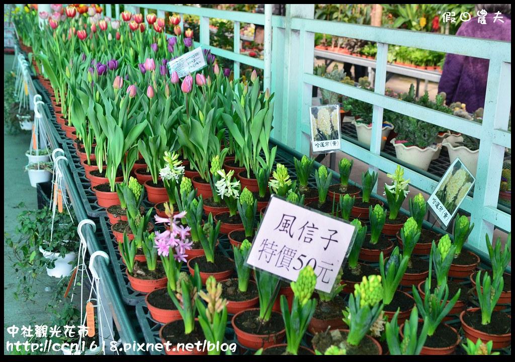 中社觀光花市DSC_1667
