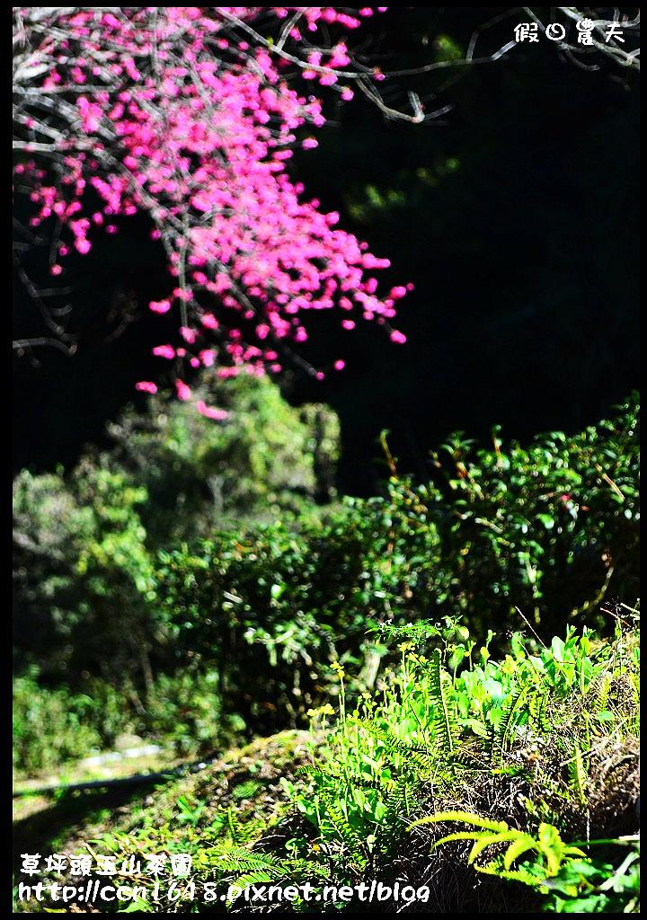 草坪頭玉山茶園DSC_1021