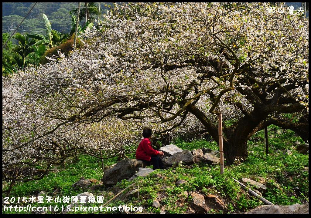 2015水里天山嶺陳董梅園DSC_9476