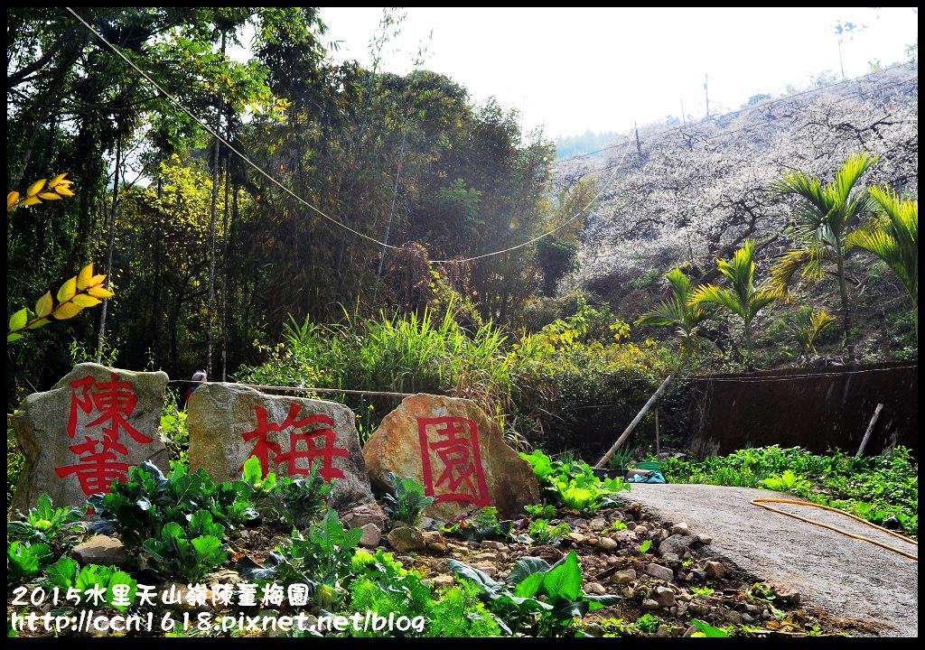 2015水里天山嶺陳董梅園DSC_9482