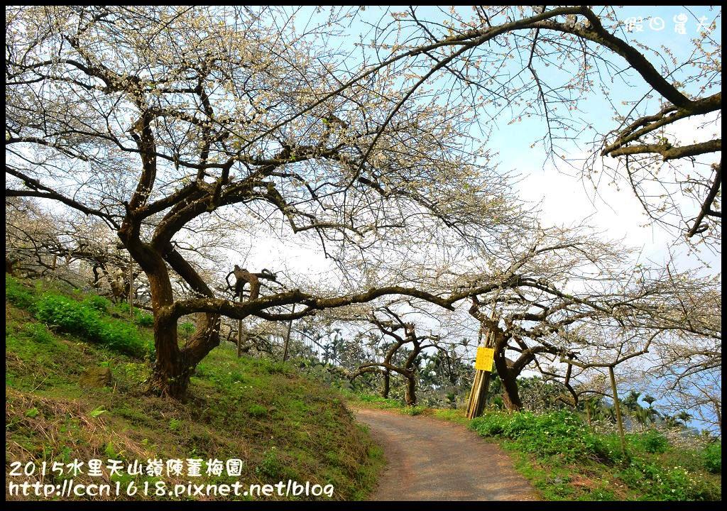 2015水里天山嶺陳董梅園DSC_9496