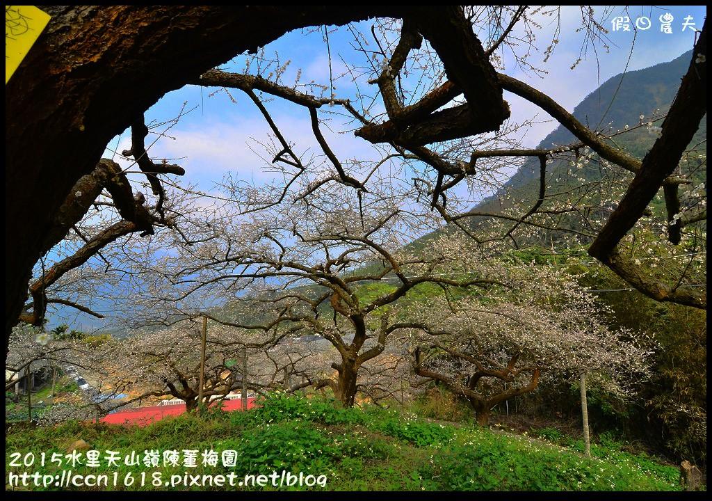 2015水里天山嶺陳董梅園DSC_9501