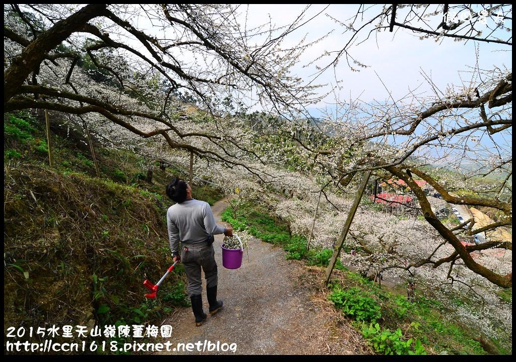 2015水里天山嶺陳董梅園DSC_9516