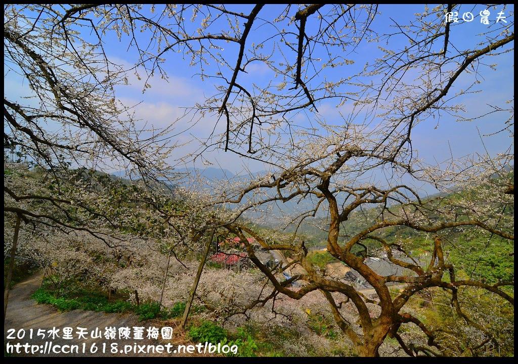2015水里天山嶺陳董梅園DSC_9517