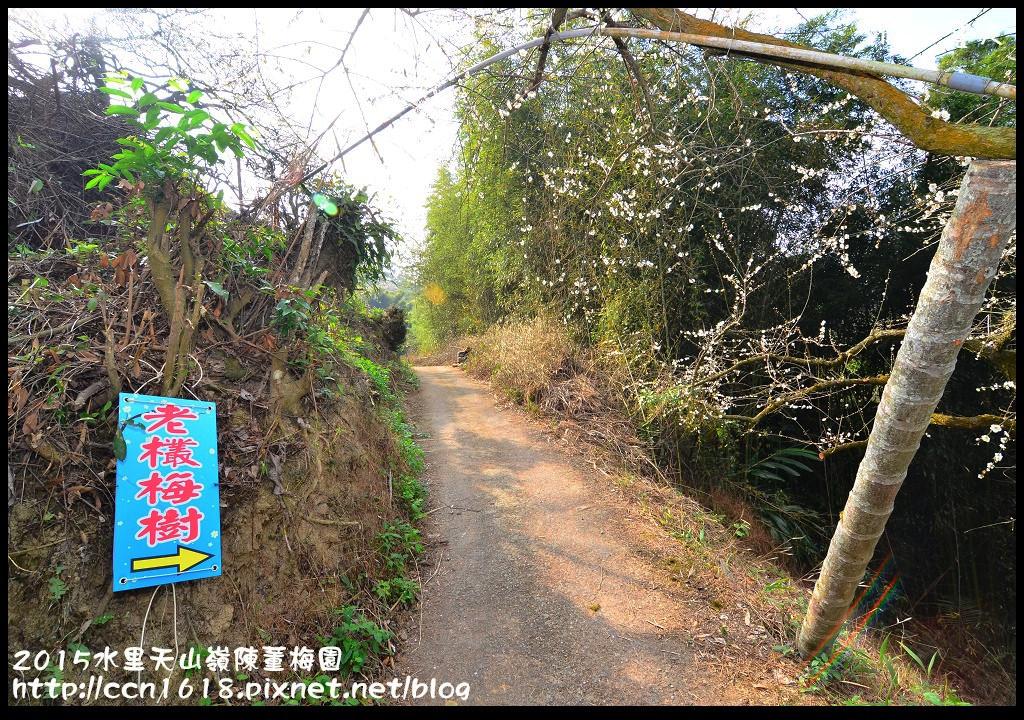 2015水里天山嶺陳董梅園DSC_9527