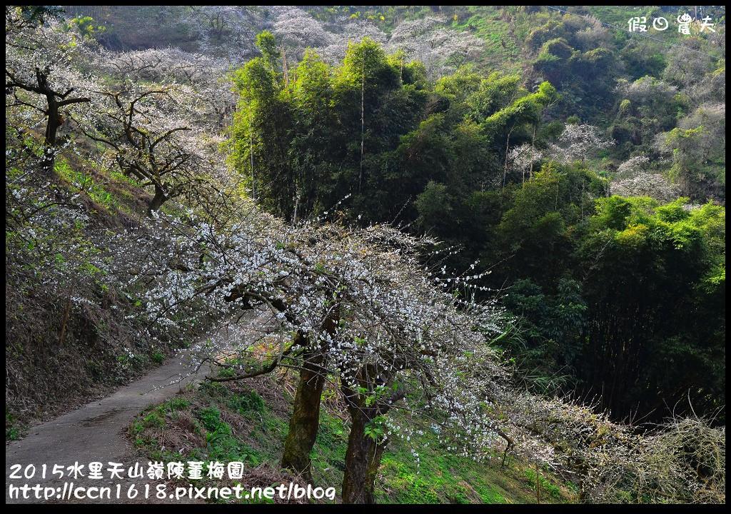 2015水里天山嶺陳董梅園DSC_9542