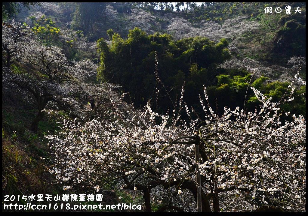 2015水里天山嶺陳董梅園DSC_9552