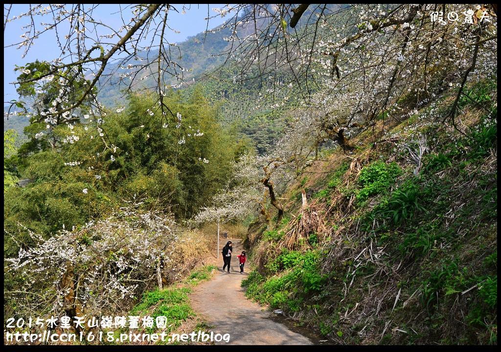 2015水里天山嶺陳董梅園DSC_9557
