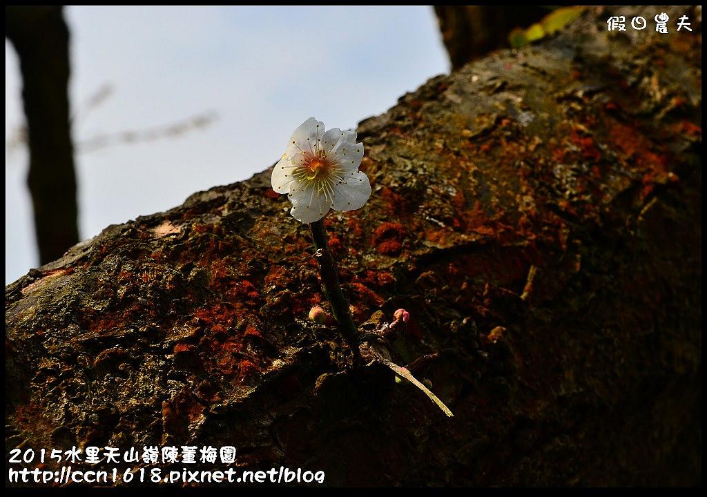 2015水里天山嶺陳董梅園DSC_9627