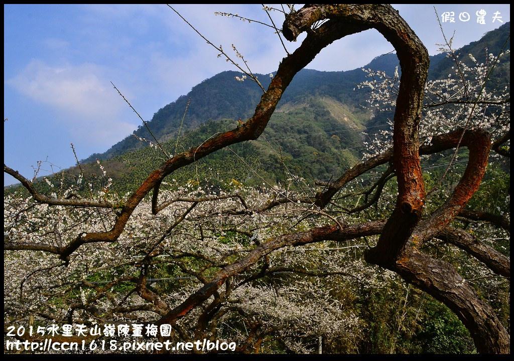 2015水里天山嶺陳董梅園DSC_9619