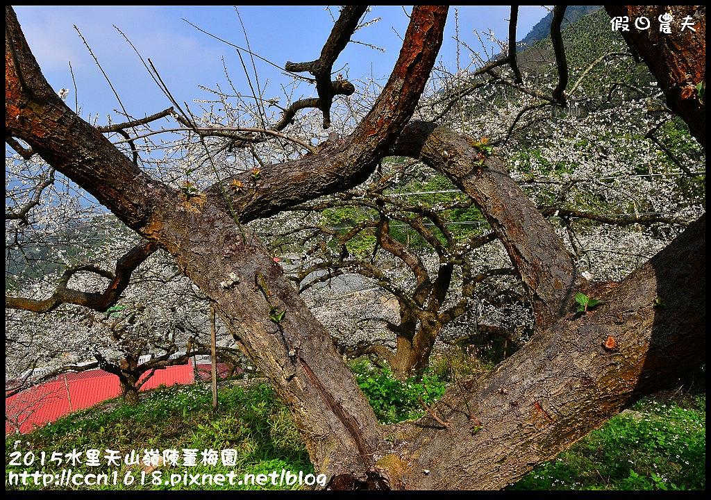 2015水里天山嶺陳董梅園DSC_9626