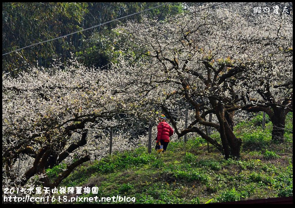 2015水里天山嶺陳董梅園DSC_9642