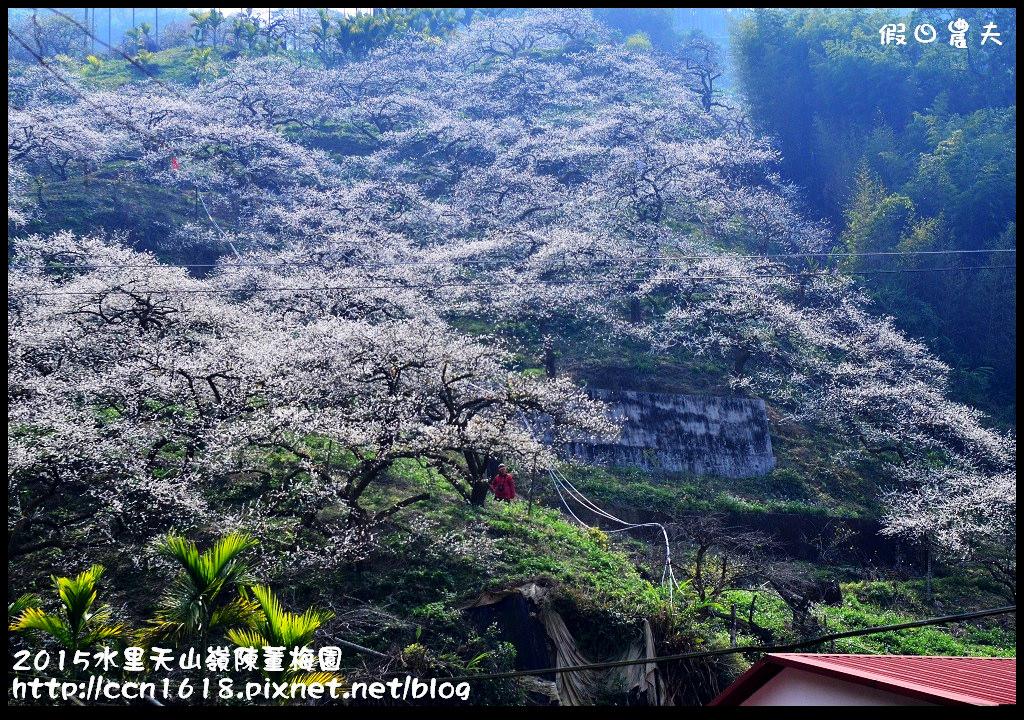2015水里天山嶺陳董梅園DSC_9659
